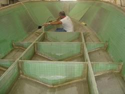 garantia estrutural barco de pesca victory